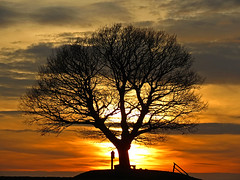 Glorious sunset (RainerSchuetz) Tags: sunset tree oak 1871 impressedbeauty francoprussianwar coth5 blinkagain bestofblinkwinners blinkagainsuperstars