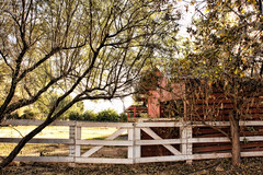 Life on the farm is kind of laid back. . . (*Lynne) Tags: arizona farm barns fences pastures southphoenix citymeetscountry