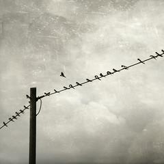 individualist (Dyrk.Wyst) Tags: sky monochrome birds wire himmel pole textures negativespace simplicity minimalism vögel swallows leitung schwalben schlicht artistictreasurechest dyrkwysttextures
