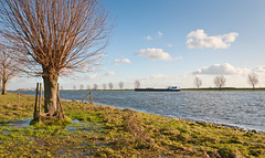 Natte uiterwaarden - Wet floodplains in the Netherlands (RuudMorijn) Tags: wood blue autumn trees winter light sky holland reflection tree green fall nature water netherlands dutch field grass weather clouds rural forest fence river landscape outside countryside boat colorful europe european ship peace view natural cloudy outdoor background bare country rustic meadow boom environment agriculture maas picturesque kale willows brabant tranquil pollard noordbrabant wilg dussen uiterwaard brabantse bergse