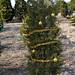 360_Trees_2011_130