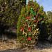 360_Trees_2011_146
