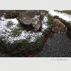 三千院門跡 中庭 (Eiji Murakami) Tags: winter japan kyoto sigma 京都 日本 冬 foveon sd1 三千院 フォビオン