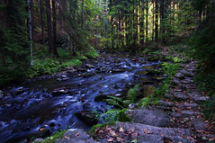 At Doubrava river (Gregor  Samsa) Tags: light water forest trek river highlands czech hiking path hike czechrepublic treking naturalreserve vysoina esko eskrepublika vysocina doubravka doubrava eskomoravskvrchovina doldoubravy eleznhory doldoubravky