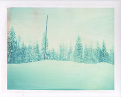 Merry xmas from the cold (emilie79*) Tags: snow firtrees polaroid180 iduvfilm