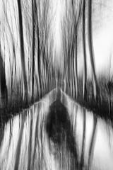 Every path has its puddle (nicola tramarin) Tags: wood longexposure trees bw italy blur nature alberi puddle italia grove path delta natura handheld bianconero icm biancoenero pioppi mosso poplars monocromatico lungaesposizione intentionalcameramovement nicolatramarin