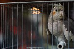bird cage malta cockatiel sliema