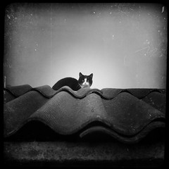 Textured Cat on a Textured Roof (DomiKetu) Tags: roof blackandwhite bw pet white black cute texture monochrome animal animals cat square lumix mono kitten panasonic textures romania format textured roumanie carre rumanien innamoramento thecatwhoturnedonandoff fz38 fz35