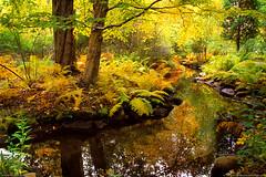 Acadia National Park, Maine (Greg from Maine) Tags: autumn nature nationalpark maine ferns barharbormaine acadia barharbor mountdesertisland mdi acadianationalpark fallseason wildgardens wildgardensofacadia