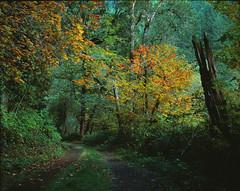 Fall on the Mountain (John Behrends) Tags: fall oregon pentax cascades pentax6x7 velviavelvia50