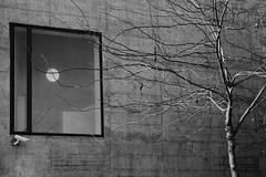 LUNA Y VENTANA (Eduardo DeGodoy) Tags: barcelona show life blue windows boy españa woman dog money paris tree cão girl animal animals cane sex rouge ventana mujer spain funny espanha europa chica you earth femme mulher fame an lips luna sexo business perro finestra vida cachorro planet garota janela catalunya cigarettes puta catalonya tabaco orgasmo dinero negocios fama programa cigarros sexe prostituta espanya vermeil