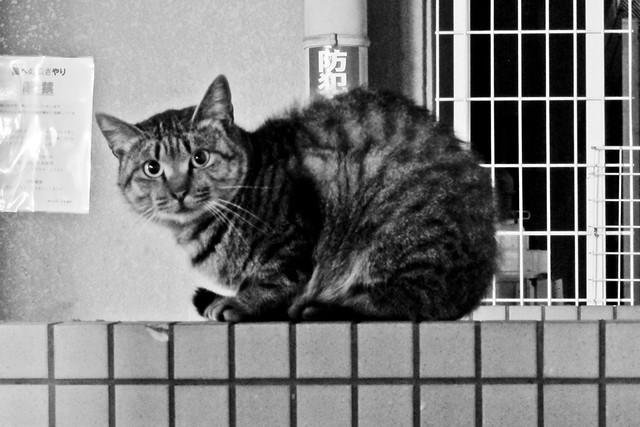 Today's Cat@2012-01-05
