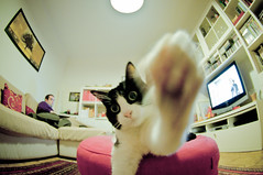 Hi There, I'm Kiki (luca.bergadano) Tags: white man black animal cat tv nikon nicola sofa greetings kiki greet d90