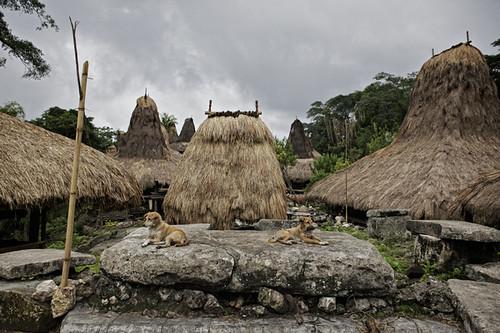 Tarung village -Sumba_201112571