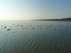P1000083 (gzammarchi) Tags: lago italia natura animale paesaggio ravenna anatra marinaromea piallassa camminata itinerario piallassabaiona