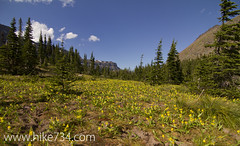 "Meadow of Glacier Lilies • <a style=""font-size:0.8em;"" href=""http://www.flickr.com/photos/63501323@N07/6690772619/"" target=""_blank"">View on Flickr</a>"