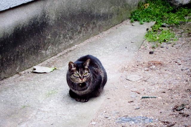 Today's Cat@2012-01-14