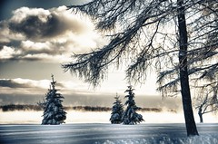 Singles Scene (lynn.h.armstrong) Tags: park camera blue trees winter light sky brown white mist snow ontario canada black art water st clouds forest silver river dark lens geotagged photography grey photo lawrence interesting mac aperture nikon long flickr afternoon shadows zoom branches south gray images steam lynn h getty pro nik nikkor armstrong stormont vr licence afs request dx farran sault attribution ingleside 2011 ifed 18200mm f3556 noderivs vrii efex d7000 lynnharmstrong