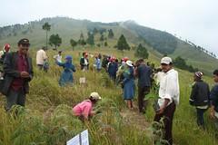 IMG_6348 (Caritas PSE) Tags: 2008 kab samosir penghijauan pusuk buhit