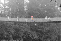 Thinking & Photography ( SUMAYAH ) Tags: bridge vancouver canon landscape photography suspension thinking capilano 550d