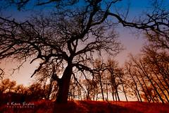 In the land of Oaks (Kevin English Photography) Tags: california blue usa tree canon landscape oak filter cachecreek bicolor capay orangered yolo coastrange 50d efs1022mmf3545usm colorefex frogpondtrail kevinenglish ambientfocus