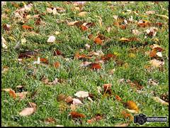 (Saeid Ghasemi) Tags: autumn beautiful iran   khomein
