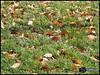 برگ پاييز (Saeid Ghasemi) Tags: autumn beautiful iran پاييز ايران khomein خمين