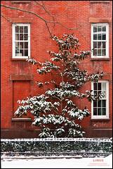 Three Windows (Linus Gelber) Tags: nyc windows winter house snow newyork building tree brick wall brooklyn fence snowstorm brooklynheights thursdaywalk canon28135mmisusm utata:project=tw300