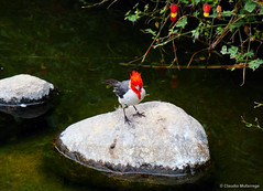 Perfectly alive / Perfectamente vivo (Claudio.Ar) Tags: naturaleza color bird nature topf25 water argentina stone zoo agua buenosaires sony dsc pjaro piedra h9 temaiken supershot claudioar claudiomufarrege