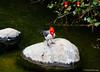 Perfectly alive / Perfectamente vivo (Claudio.Ar) Tags: naturaleza color bird nature topf25 water argentina stone zoo agua buenosaires sony dsc pájaro piedra h9 temaiken supershot claudioar claudiomufarrege