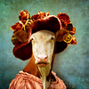 the sulky lady (Martine Roch) Tags: cow vache lady portrait moody sulky character thecharacters lescaractères flypapertextures surreal surrealist animal photomontage love expression costume hat flowers square martineroch