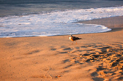 My friend Mr. Bird (*~Dharmainfrisco~*) Tags: ocean california travel vacation america mexico los san pacific south lucas beaches baja penninsula dharma 2012 cabos