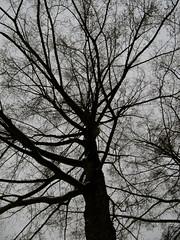 Winter 2012 (Picturesafari) Tags: winter amsterdam fotografie kunst sneeuw natuur 2012 koud seizoen vriezen