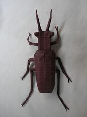 Robert J. Lang's Salt Creek Tiger Beetle, folded by me (Hansen Yang) Tags: robert creek origami pattern tiger beetle salt cp crease lang