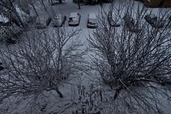 primi passi sulla neve (Nikonizzata) Tags: trees blackandwhite italy white snow rome alberi walking footprints bn neve bianco nero orme nevicata passi