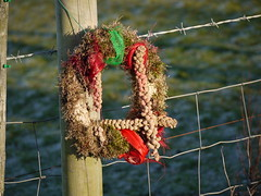 food bird memorial tit cheshire low hyde wreath millet werneth