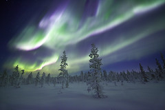 Solar Storm (antonyspencer) Tags: trees winter snow cold ice pine landscape frozen europe sweden arctic aurora astronomy nordic scandinavia kiruna spruce northernlights auroraborealis arcticcircle magneticfield solarstorm earthandspace frozenforest bestnewcomer competition:astrophoto=2012