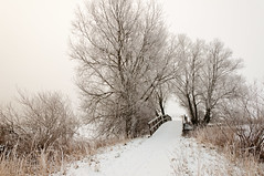 Winterlandschap - Dutch winter landscape (RuudMorijn) Tags: park morning bridge trees winter light sky white mist snow cold holland tree ice reed nature netherlands dutch field silhouette misty fog rural season landscape outdoors dawn countryside frozen wooden bomen scenery europe soft frost branch quiet natural outdoor snowy country sneeuw foggy scenic nobody frosty scene shades explore freeze rush lonely brug wintertime kale brabant tranquil landschap subtle noordbrabant koud brabants nuances winterlandschap lagezwaluwe drimmelen naturepoetry ochtendnevel superaplus aplusphoto natureselegantshots ringexcellence gatvandenham