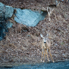 Blending In (george.bremer) Tags: park afternoon hills bearmountain fujixpro1