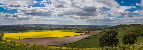 Yellow carpet (56689969@N02), photography tags:  flowers england panorama tree clouds prime kent spring nikon northdowns maidstone rapeseed thurnham 35mmf18 d7100
