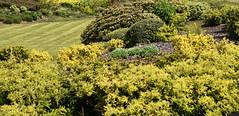 DSC_1176 Calcot (PeaTJay) Tags: flowers trees plants macro nature gardens fauna outdoors reading flora parks micro closeups berkshire bushes calcot tilehurst nikond750