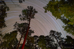 Piney Woods (Sergio Garcia Rill) Tags: camping trees tree night star us texas nightscape unitedstates nationalforest astrophotography nightsky startrails davycrockett 2016 kennard pineywoods ratclifflake