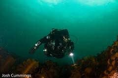 IMG_8955 (Josh.Cummings) Tags: ocean divers dive newengland diving ann cape drysuit rockport rebreather ccr cummings revo coldwater rockportma nitrox joshcummings joshuacummings nategarrett joshcummingsunderwater newenglanduwphotographywater capeanndivers jrcummings