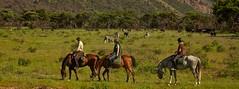 Out in Africa Zebra Horses (Nancy D. Brown) Tags: horses safari horsebackriding zebras outinafricaencounters