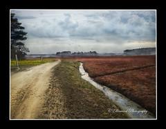 The Road Past The Cranberry Bog (windshadow2) Tags: road morning nature fence landscape stream post olympus cranberry bog omd em1