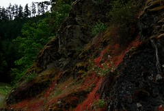 moss and micro floral (Alvin Harp) Tags: trees red cliff mountain nature oregon forest moss flora sony may mountainside microlandscape 2016 naturesbeauty teamsony sonya7rii alvinharp