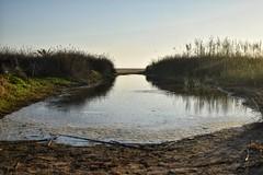Aguas estancadas (alvaroalex_333) Tags: agua estancada aguaestancada aguasestancadas playa mar conil conildelafrontera arena insectos bichos azul plantas verde paisaje paisajes paseomaritimo