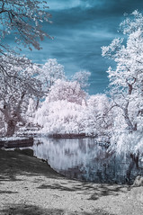 Crystal Palace Park (blackwoodse6) Tags: park uk blue trees england white london ir nikon bluesky infrared foilage southlondon crystalpalacepark falsecolour southeastlondon londonparks 720nm nikond300