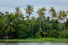 _DSC0910 (Roy Prasad) Tags: lake water river sony houseboat kerala prasad backwaters allapuzha rx10 allappey royprasad rx10m2