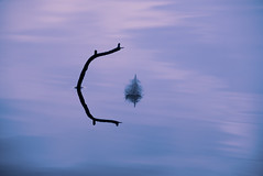 Skyrider (v923z) Tags: blue sky cloud white lake abstract reflection nature water feather frame twig simple minimalist seefeld wildsee